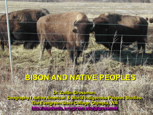 BISON AND NATIVE PEOPLES