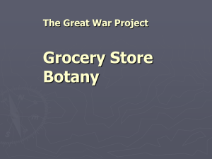 Grocery Store Botany The Great War Project