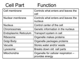 Organelle Quiz Study Guide 1. List the 3 parts of the Cell Theory 1