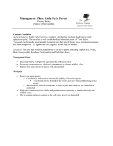 Management Plan: Little Falls Forest