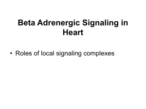 Beta Adrenergic Signaling in Heart • Roles of local signaling complexes