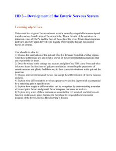 HD 3 – Development of the Enteric Nervous System Learning objectives