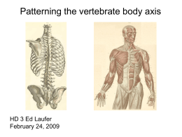 Patterning the vertebrate body axis HD 3 Ed Laufer February 24, 2009