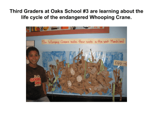 Third Graders at Oaks School #3 are learning about the