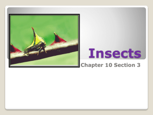 Insects Chapter 10 Section 3