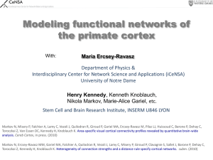 Modeling functional networks of the primate cortex
