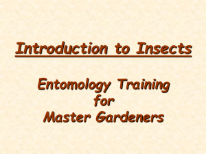 Introduction to Insects Entomology Training for Master Gardeners