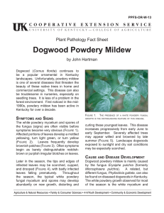 Dogwood Powdery Mildew - UK College of Agriculture