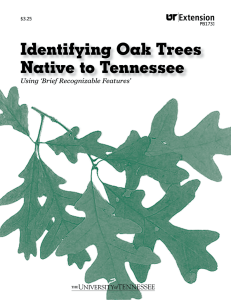 Identifying Oak Trees Native to Tennessee