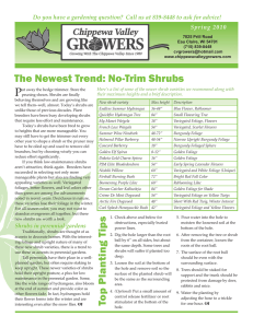 No-Trim Shrubs - Chippewa Valley Growers