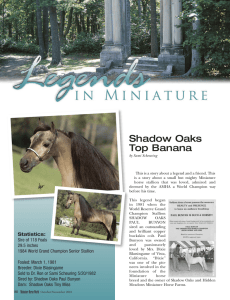 Shadow Oaks Top Banana - American Miniature Horse Association