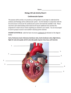 Biology 165 Lab Activity Sheet 5 Cardiovascular System