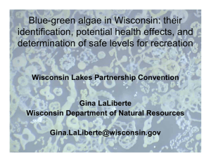 Blue-green algae in Wisconsin: their identification, potential