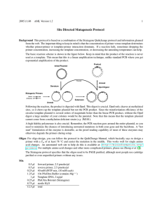 Site Directed Mutagenesis Protocol
