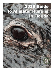 2016 Guide to Alligator Hunting in Florida
