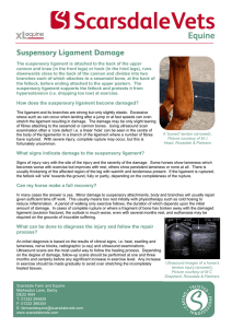 How does the suspensory ligament become damaged? What signs