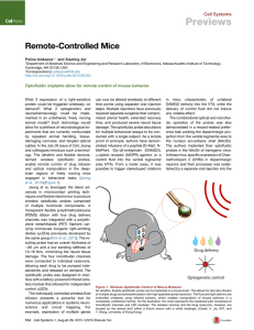 Remote-Controlled Mice - Rogers Research Group