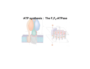 ATP synthesis : The F F