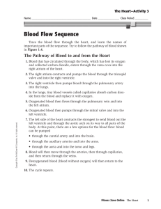 Blood Flow Sequence