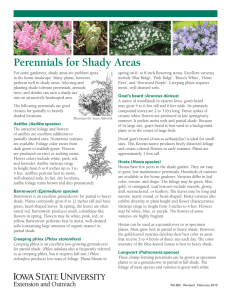 Perennials for Shady Areas - Extension Store