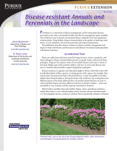 Disease Resistant Annuals and Perennials in