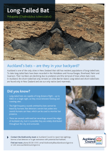 Long-Tailed Bat - Auckland Council
