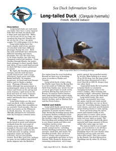 Sea Duck Information Series Long-tailed Duck