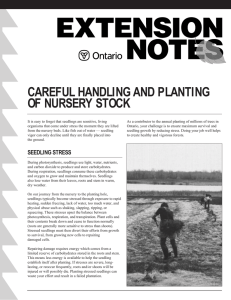 CAREFUL HANDLING AND PLANTING OF NURSERY STOCK