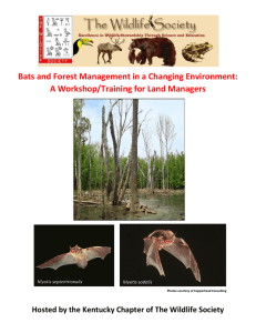 Bats and Forest Management in a Changing Environment: A