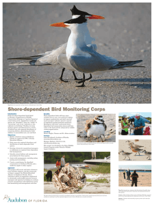 Introduction: Of the 23 shore-dependent birds listed in Florida`s