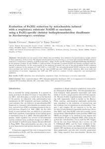 Evaluation of Fe(III) reduction by mitochondria induced
