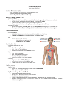 Circulatory, Respiratory, and Lymphatic
