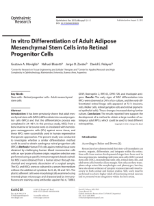In vitro Differentiation of Adult Adipose