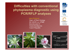Difficulties with conventional phytoplasma diagnostic using PCR