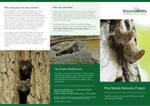 - Pine Marten Recovery Project