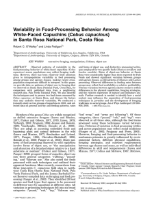 Variability in food-processing behavior among white