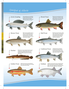 Sport Fish Identification