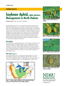 Soybean Aphid, Aphis glycines - NDSU Agriculture