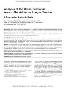 Analysis of the Cross-Sectional Area of the Adductor Longus Tendon