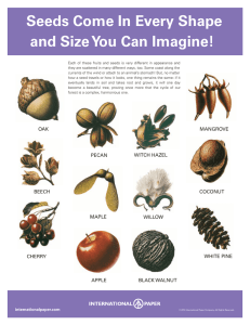 Seeds Come In Every Shape and Size You Can Imagine! Seeds