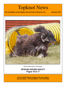 Topknot News - Afghan Hound Club of America, Inc.