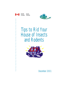 Tips to Rid your House of Insects and Rodents