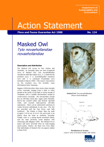 Masked Owl - Department of Environment, Land, Water and Planning