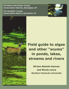"Field guide to algae and other ""scums"""