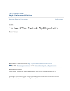 The Role of Water Motion in Algal Reproduction