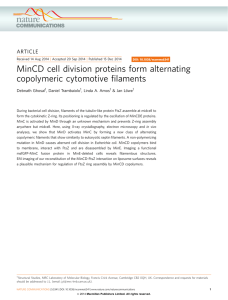 MinCD cell division proteins form alternating copolymeric filaments