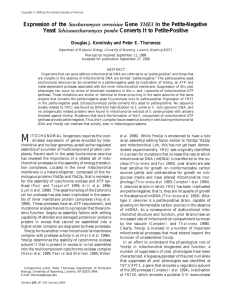 Yeast as a model organism (ppt presentation)