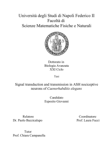1) Pain and Nociception - fedOA - Università degli Studi di Napoli