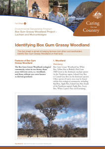 Identifying Box Gum Grassy Woodland