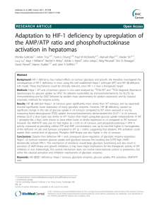 Adaptation to HIF-1 deficiency by upregulation of the AMP/ATP ratio